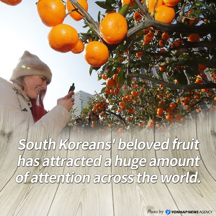 South Koreans' beloved fruit has attracted a huge amount of attention across the world.