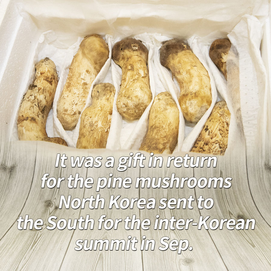 It was a gift in return for the pine mushrooms North Korea sent to the South for the inter-Korean summit in Sep.
