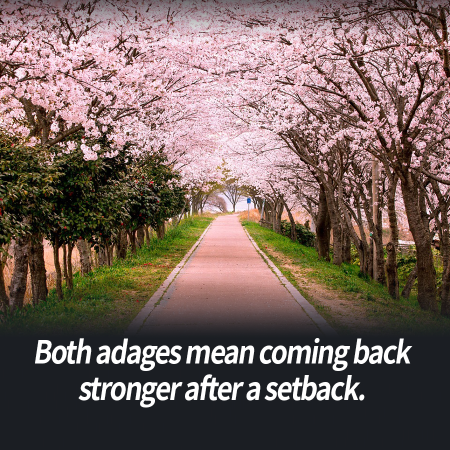 Both adages mean coming back stronger after a setback.