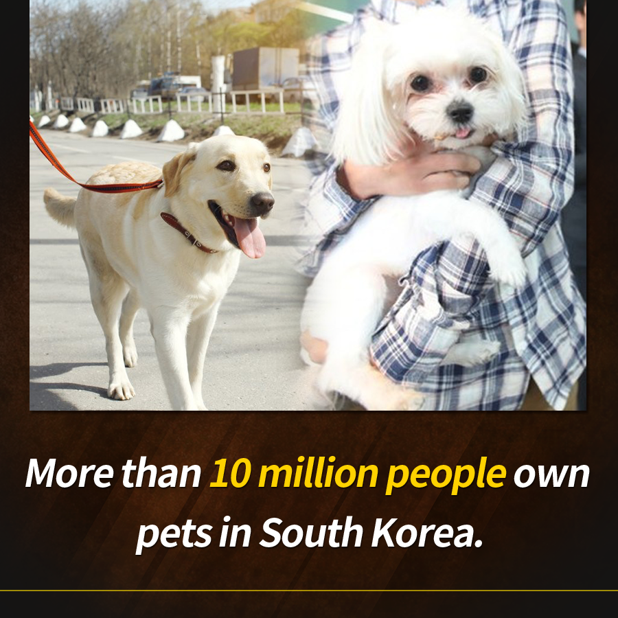 More than 10 million people own pets in South Korea.