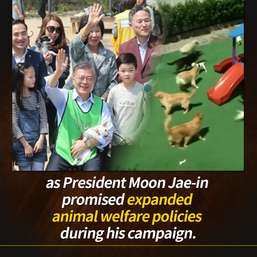 as President Moon Jae-in promised expanded animal welfare policies during his campaign.
