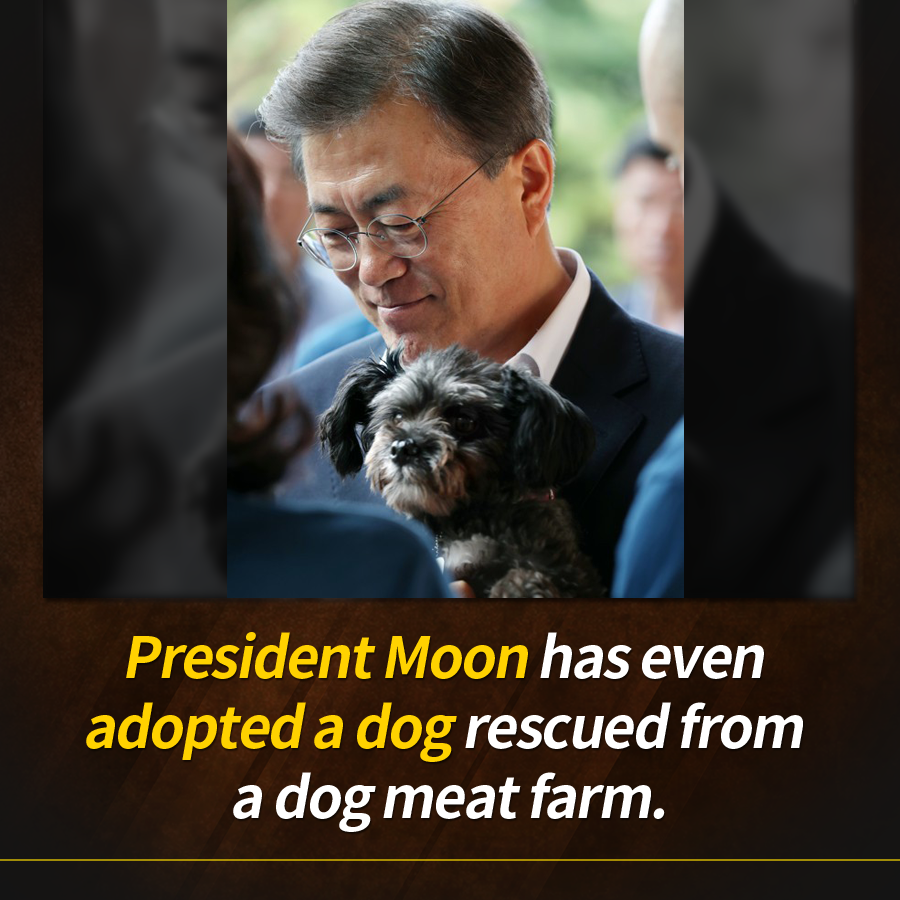 President Moon has even adopted a dog rescued from a dog meat farm.