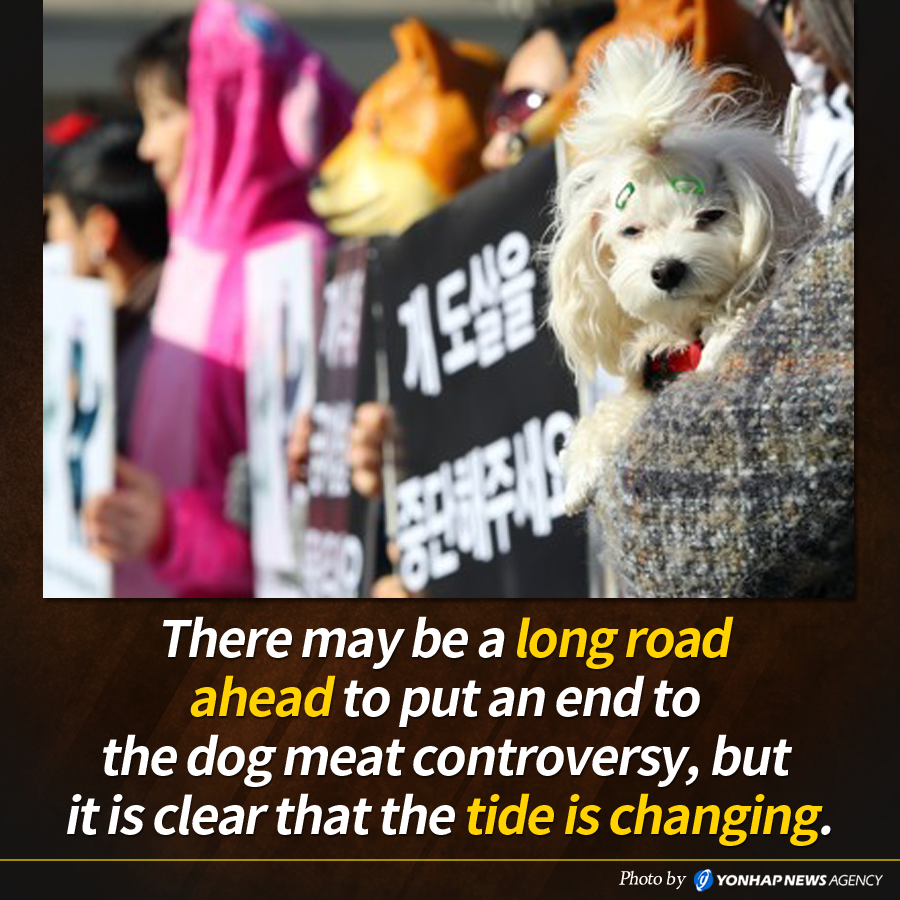 There may be a long road ahead to put an end to the dog meat controversy, but it is clear that the tide is changing.