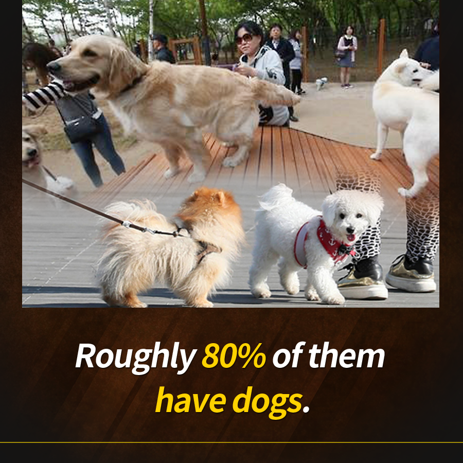 Roughly 80% of them have dogs.