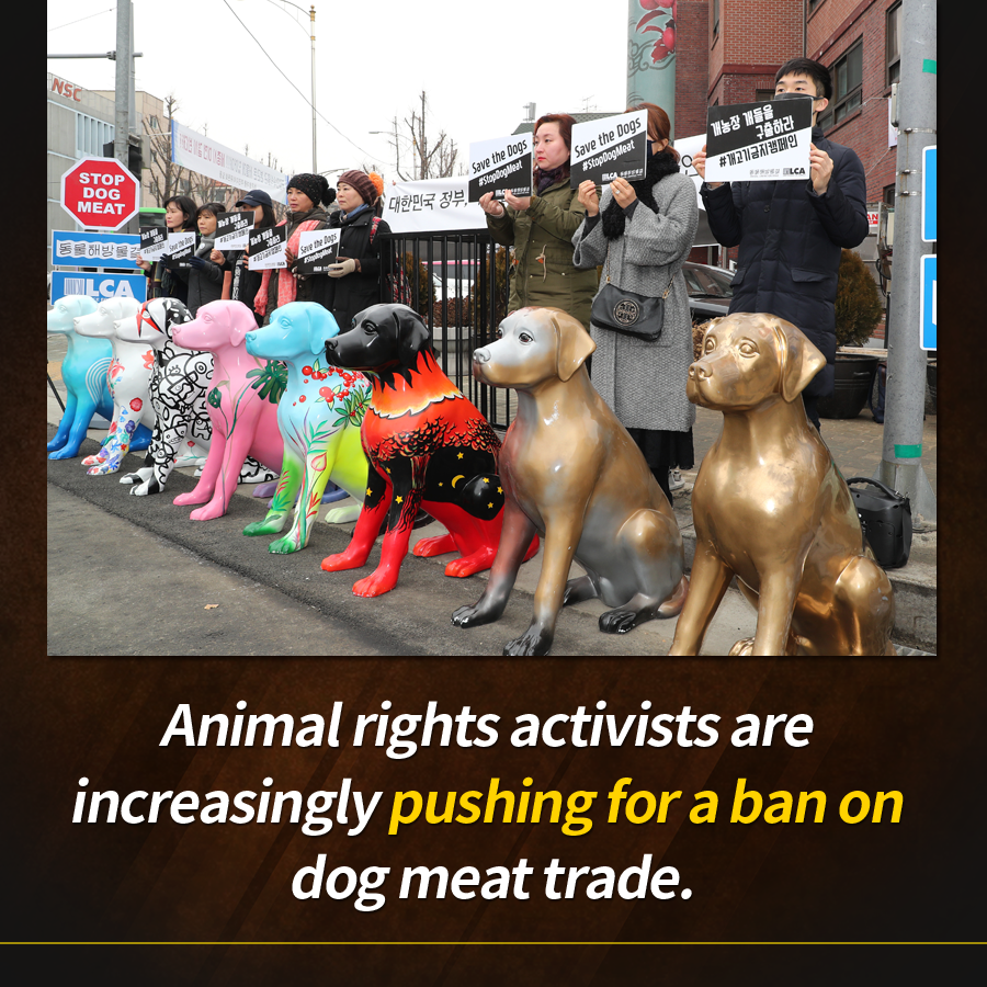 Animal rights activists are increasingly pushing for a ban on dog meat trade.