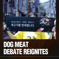 Dog Meat Debate Reignites